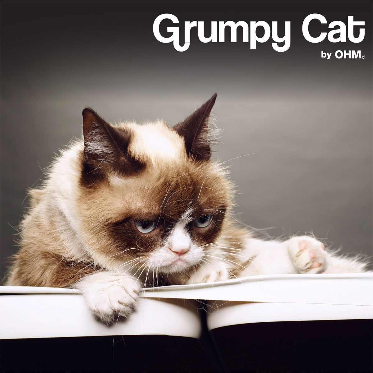 ohm-collections-grumpy-cat